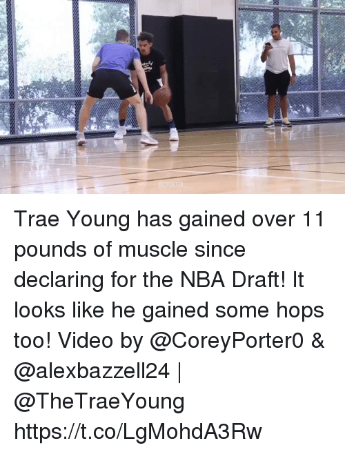 hops: Trae Young has gained over 11 pounds of muscle since declaring for the NBA Draft! It looks like he gained some hops too!  Video by @CoreyPorter0 & @alexbazzell24 | @TheTraeYoung https://t.co/LgMohdA3Rw
