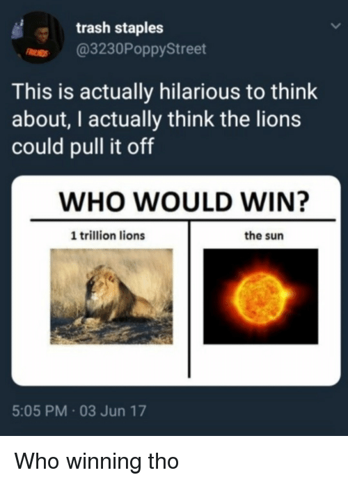 Memes, Trash, and Lions: trash staples  r @3230PoppyStreet  This is actually hilarious to think  about, I actually think the lions  could pull it off  WHO WOULD WIN?  1 trillion lions  the sun  5:05 PM 03 Jun 17 Who winning tho