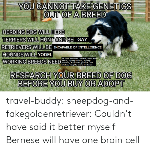 myself: travel-buddy:  sheepdog-and-fakegoldenretriever:  Couldn't have said it better myself   Bernese will have one brain cell