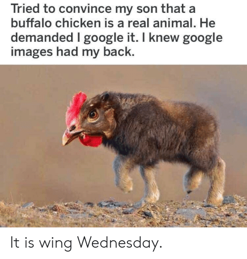 Wednesday: Tried to convince my son that a  buffalo chicken is a real animal. He  demanded google it. I knew google  images had my back. It is wing Wednesday.