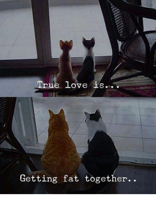 Love, Memes, and True: True love is...  Getting fat together..