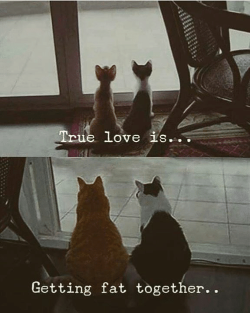 Dank, Love, and True: True love is...  Getting fat together