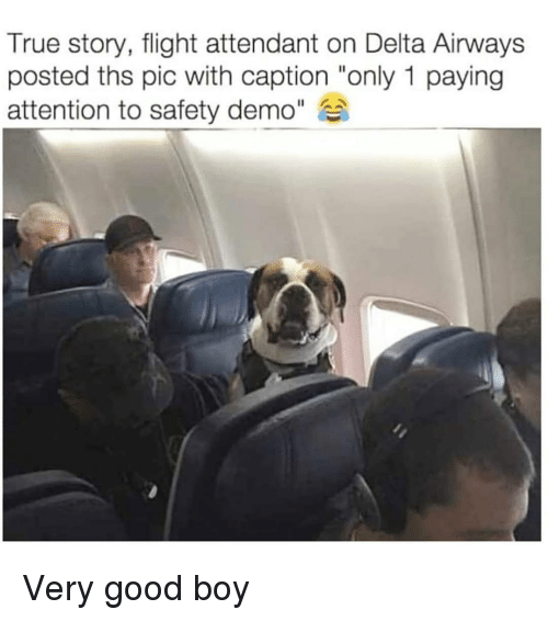 """Memes, True, and Delta: True story, flight attendant on Delta Airways  posted ths pic with caption """"only 1 paying  attention to safety demo"""" Very good boy"""