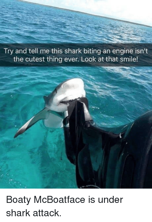 Dank, Shark, and Smile: Try and tell me this shark biting an engine isn't  the cutest thing ever. Look at that smile! Boaty McBoatface is under shark attack.