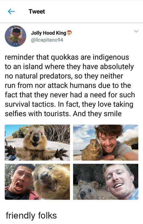 jolly: Tweet  Jolly Hood King  @llcapitano94  reminder that quokkas are indigenous  to an island where they have absolutely  no natural predators, so they neither  run from nor attack humans due to the  fact that they never had a need for such  survival tactics. In fact, they love taking  selfies with tourists. And they smile friendly folks