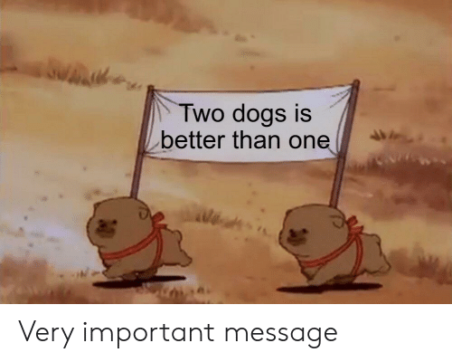 Dogs, One, and  Message: Two dogs is  better than one Very important message