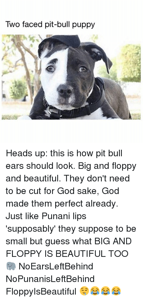 two faced: Two faced pit-bull puppy Heads up: this is how pit bull ears should look. Big and floppy and beautiful. They don't need to be cut for God sake, God made them perfect already. Just like Punani lips 'supposably' they suppose to be small but guess what BIG AND FLOPPY IS BEAUTIFUL TOO 🐘 NoEarsLeftBehind NoPunanisLeftBehind FloppyIsBeautiful 🤤😂😂😂
