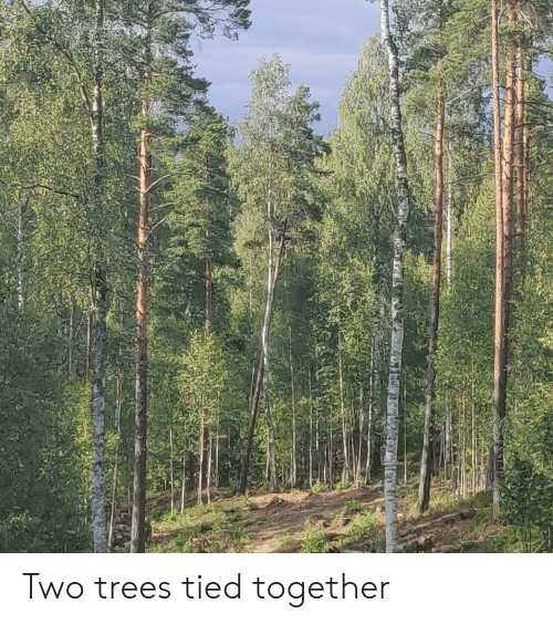 Trees, Together, and  Two: Two trees tied together