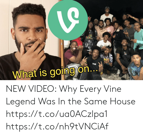 Vine: TY  LEASORE  What is going on... NEW VIDEO:   Why Every Vine Legend Was In the Same House  https://t.co/ua0ACzlpa1 https://t.co/nh9tVNCiAf