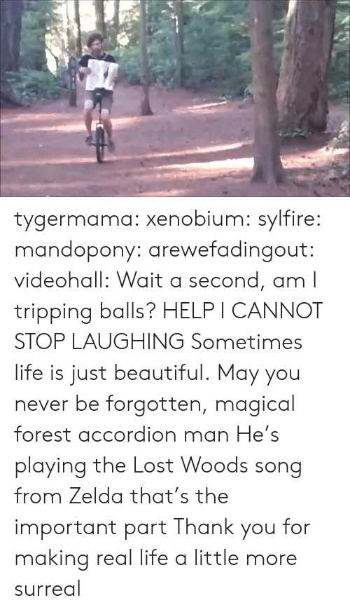 Beautiful, Life, and Tumblr: tygermama: xenobium:  sylfire:  mandopony:  arewefadingout:  videohall:  Wait a second, am I tripping balls?  HELP I CANNOT STOP LAUGHING  Sometimes life is just beautiful.  May you never be forgotten, magical forest accordion man  He's playing the Lost Woods song from Zelda that's the important part   Thank you for making real life a little more surreal
