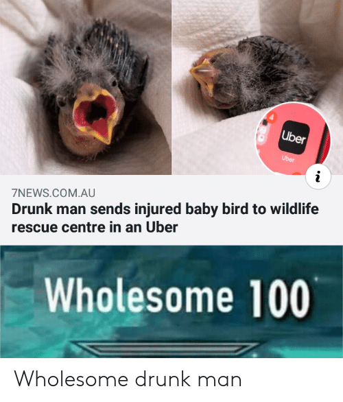 Wholesome: Uber  Uber  Drunk man sends injured baby bird to wildlife  scue centre in an Uber  7NEWS.COM.AU  Wholesome 100 Wholesome drunk man