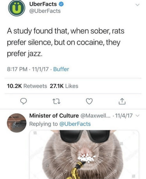 minister: UberFacts  @UberFacts  A study found that, when sober, rats  prefer silence, but on cocaine, they  prefer jazz.  8:17 PM . 11/1/17 Buffer  10.2K Retweets 27.1K Likes  Minister of Culture @Maxwell.. 11/4/17  Replying to @UberFacts