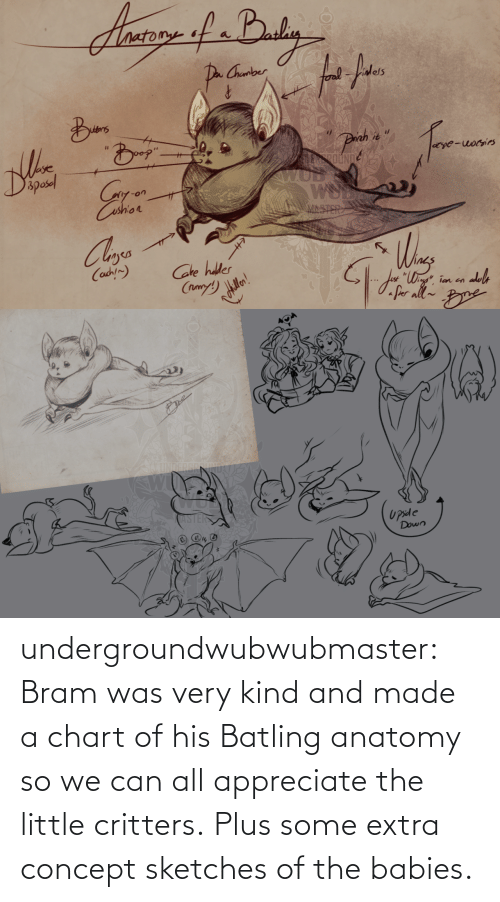 Little: undergroundwubwubmaster:  Bram was very kind and made a chart of his Batling anatomy so we can all appreciate the little critters.Plus some extra concept sketches of the babies.