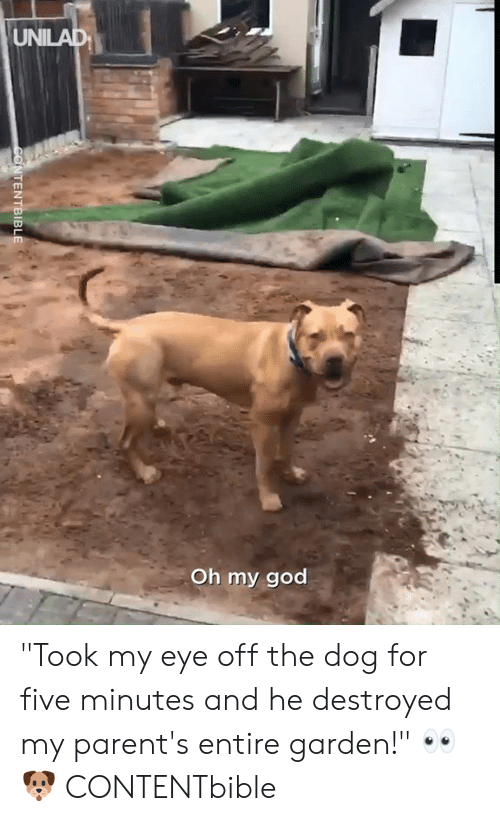 "Dank, God, and Oh My God: UNILAD  Oh my god  CONTENTBIBLE ""Took my eye off the dog for five minutes and he destroyed my parent's entire garden!"" 👀🐶  CONTENTbible"