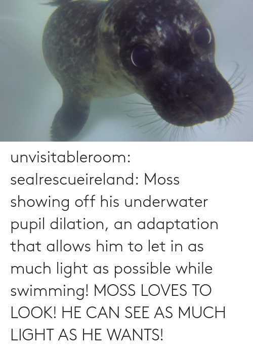 much: unvisitableroom: sealrescueireland: Moss showing off his underwater pupil dilation, an adaptation that allows him to let in as much light as possible while swimming! MOSS LOVES TO LOOK! HE CAN SEE AS MUCH LIGHT AS HE WANTS!