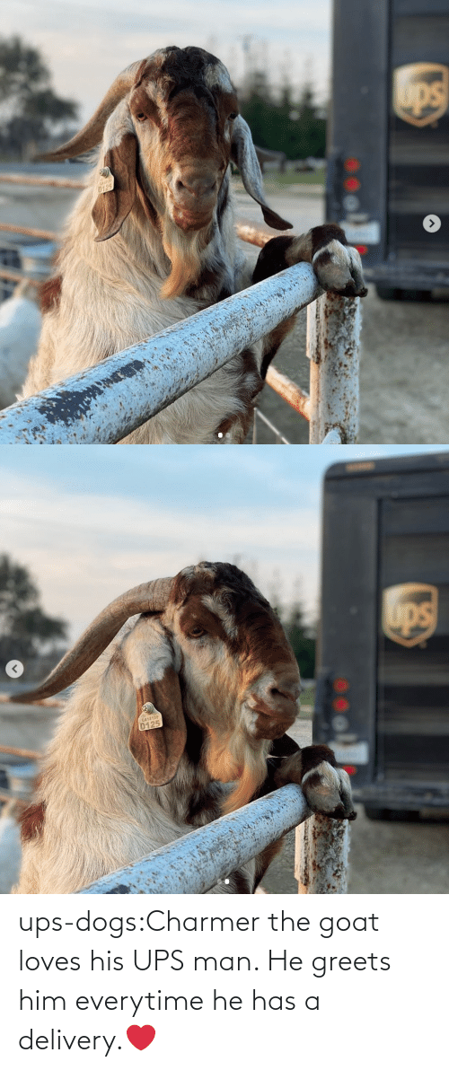 GOAT: ups-dogs:Charmer the goat loves his UPS man. He greets him everytime he has a delivery.❤️