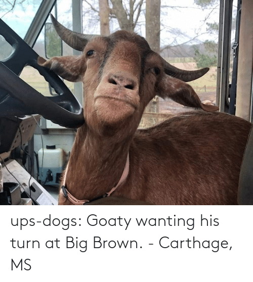 turn: ups-dogs:  Goaty wanting his turn at Big Brown.- Carthage, MS
