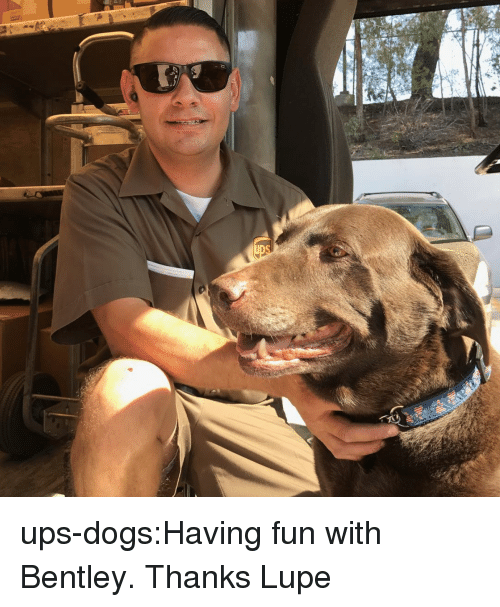 Dogs, Target, and Tumblr: ups-dogs:Having fun with Bentley. Thanks Lupe