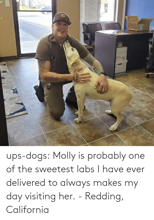 I Have: ups-dogs:  Molly is probably one of the sweetest labs I have ever delivered to always makes my day visiting her.- Redding, California