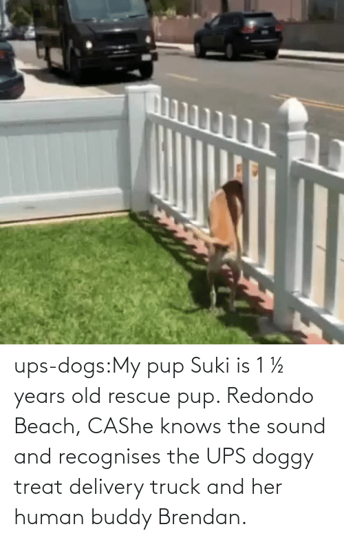 Target: ups-dogs:My pup Suki is 1 ½ years old rescue pup. Redondo Beach, CAShe knows the sound and recognises the UPS doggy treat delivery truck and her human buddy Brendan.