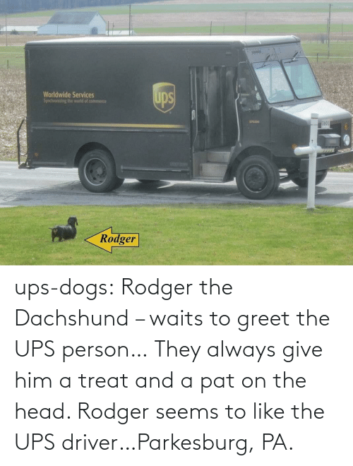 him: ups-dogs:  Rodger the Dachshund – waits to greet the UPS person… They always give him a treat and a pat on the head. Rodger seems to like the UPS driver…Parkesburg, PA.