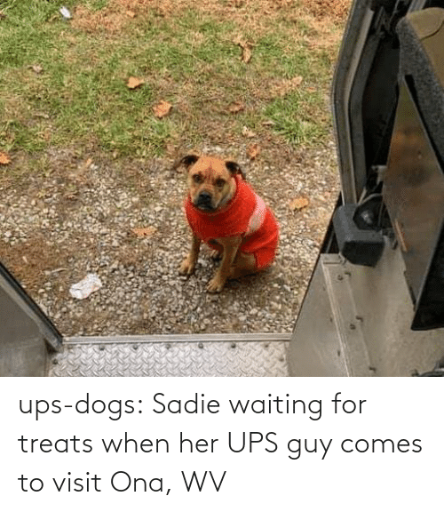 Waiting...: ups-dogs:  Sadie waiting for treats when her UPS guy comes to visit Ona, WV