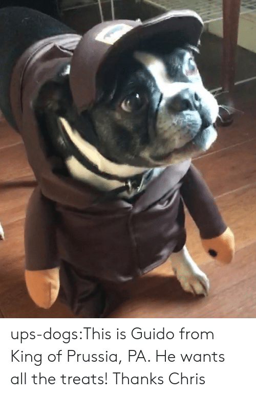 Dogs, Target, and Tumblr: ups-dogs:This is Guido from King of Prussia, PA. He wants all the treats! Thanks Chris