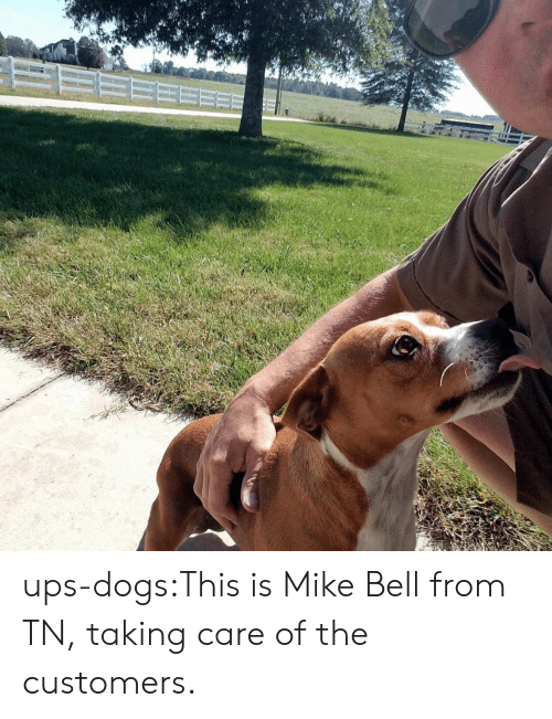 Dogs, Target, and Tumblr: ups-dogs:This is Mike Bell from TN, taking care of the customers.