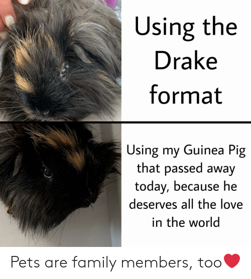 Drake, Family, and Love: Using the  Drake  format  Using my Guinea Pig  that passed away  today, because he  deserves all the love  in the world Pets are family members, too❤️