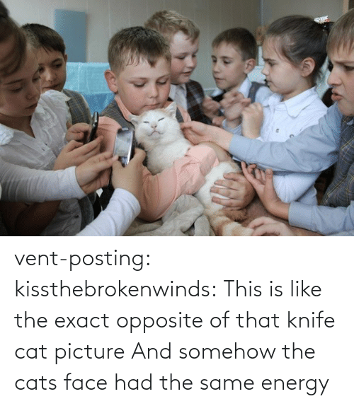 same: vent-posting:  kissthebrokenwinds: This is like the exact opposite of that knife cat picture  And somehow the cats face had the same energy