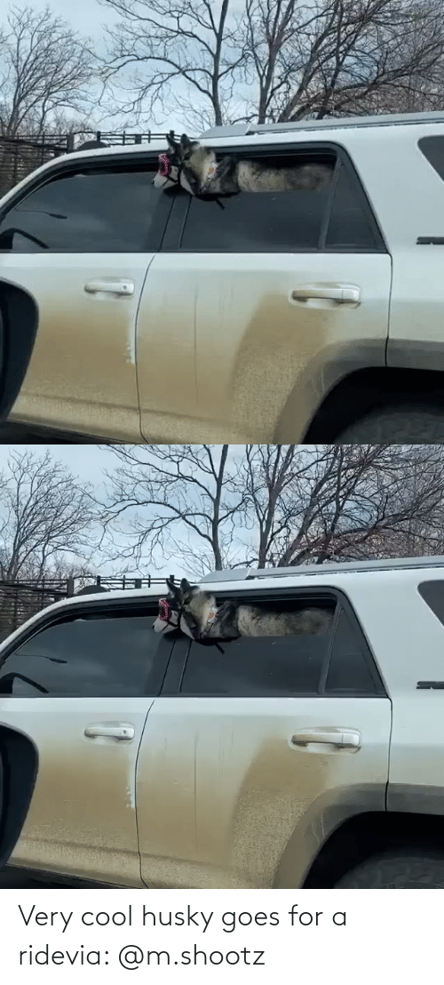 Very: Very cool husky goes for a ridevia: @m.shootz
