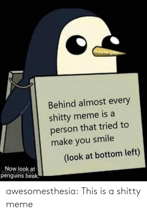Every: Voure gay  Behind almost every  shitty meme is a  person that tried to  make you smile  (look at bottom left)  Now look at  Have  penguins beak. awesomesthesia:  This is a shitty meme