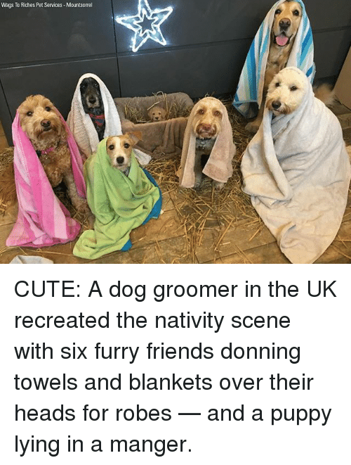 nativity: Wags To Riches Pet Services Mountsorrel CUTE: A dog groomer in the UK recreated the nativity scene with six furry friends donning towels and blankets over their heads for robes — and a puppy lying in a manger.