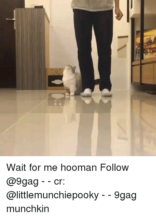 wait for me: Wait for me hooman Follow @9gag - - cr: @littlemunchiepooky - - 9gag munchkin