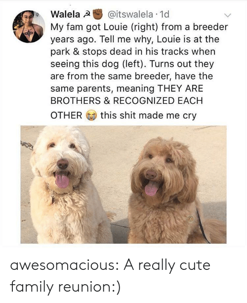 reunion: Walela @itswalela 1d  My fam got Louie (right) from a breeder  years ago. Tell me why, Louie is at the  park & stops dead in his tracks when  seeing this dog (left). Turns out they  are from the same breeder, have the  same parents, meaning THEY ARE  BROTHERS & RECOGNIZED EACH  OTHER this shit made me cry awesomacious:  A really cute family reunion:)