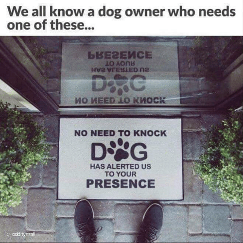 Memes, 🤖, and Dog: We all know a dog owner who needs  one of these...  LO Aonb  NO NEED TO KNOCK  HAS ALERTED US  TO YOUR  PRESENCE  odditymall
