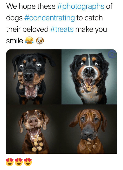Dogs, Memes, and Smile: We hope these #photographs of  dogs #concentrating to catch  their beloved #treats make you  smile ジ 😍😍😍