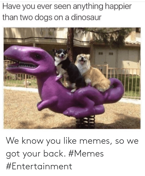 know: We know you like memes, so we got your back. #Memes #Entertainment