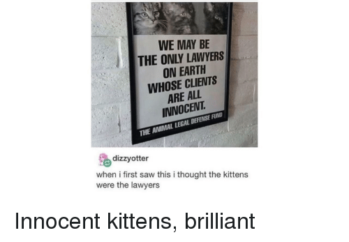 Saw, Animal, and Earth: WE MAY BE  THE ONLY LAWYERS  ON EARTH  WHOSE CLIENTS  ARE ALL  INNOCENT  THE ANIMAL LEGAL DEFENSE FUND  % dizzyotter  when i first saw this i thought the kittens  were the lawyers Innocent kittens, brilliant