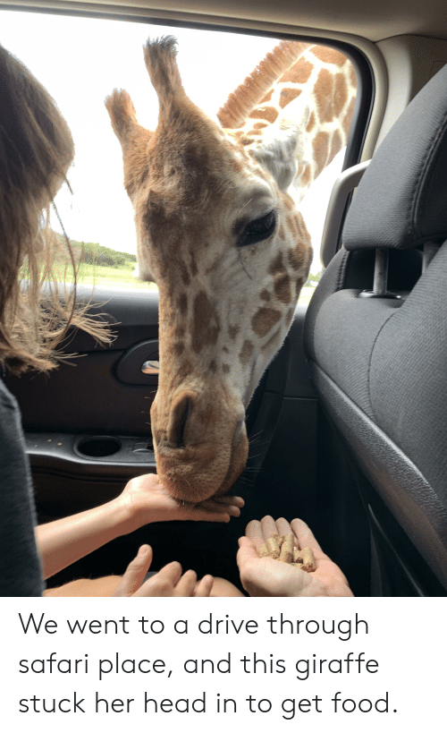 We Went to a Drive Through Safari Place and This Giraffe