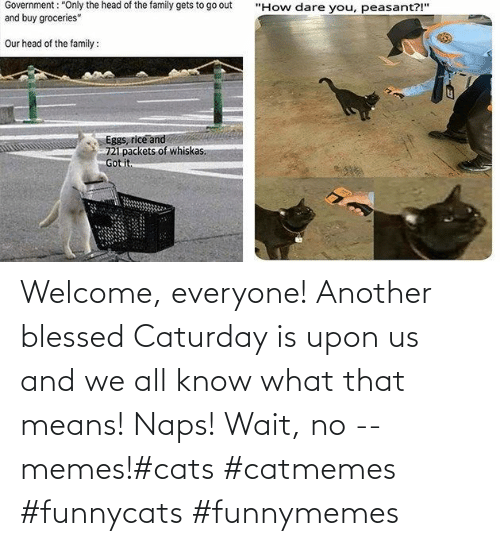 means: Welcome, everyone! Another blessed Caturday is upon us and we all know what that means! Naps! Wait, no -- memes!#cats #catmemes #funnycats #funnymemes