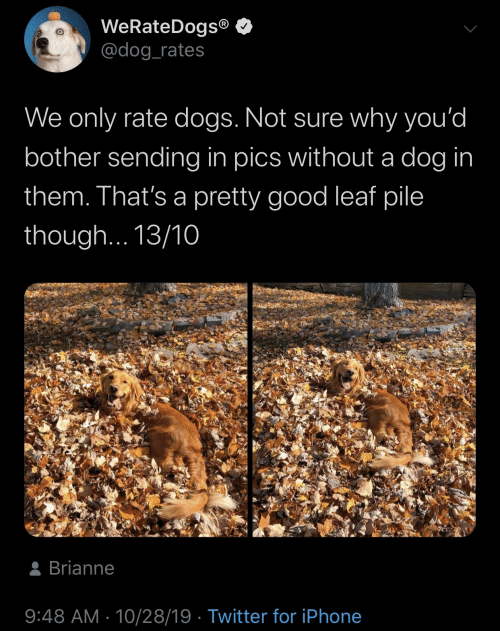 Without: WeRateDogs®  @dog_rates  We only rate dogs. Not sure why you'd  bother sending in pics without a dog in  them. That's a pretty good leaf pile  though... 13/10  8 Brianne  9:48 AM · 10/28/19 · Twitter for iPhone