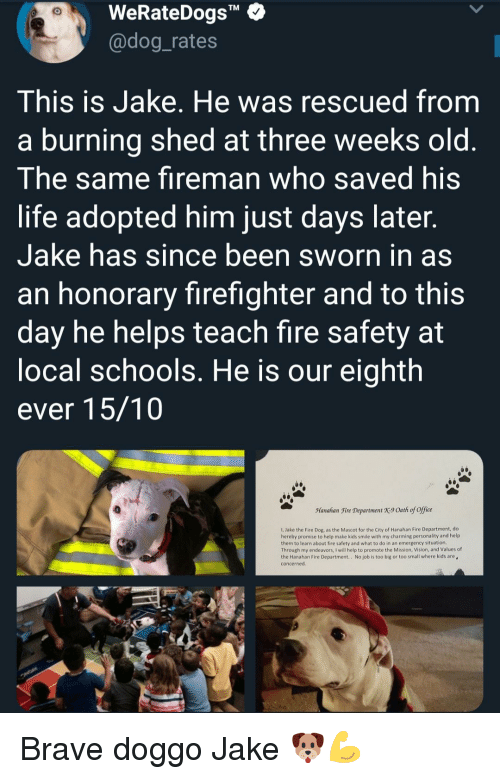 """Sworn: WeRateDogs""""  @dog_rates  TM  This is Jake. He was rescued from  a burning shed at three weeks old  The same fireman who saved his  life adopted him just days later  Jake has since been sworn in as  an honorary firefighter and to this  day he helps teach fire safety at  ocal schools. He is our eighth  ever 15/10  Manahan Fire Department X9 Oath of office  1, Jake the Fire Dog, as the Mascot for the City of Hanahan Fire Department, do  hereby promise to help make kids smile with my charming personality and help  them to learn about fire safety and what to do in an emergency situation  Through my endeavors, I will help to promote the Mission, Vision, and Values of  the Hanahan Fire Department.. No job is too big or too small where kids are  concerned Brave doggo Jake 🐶💪"""