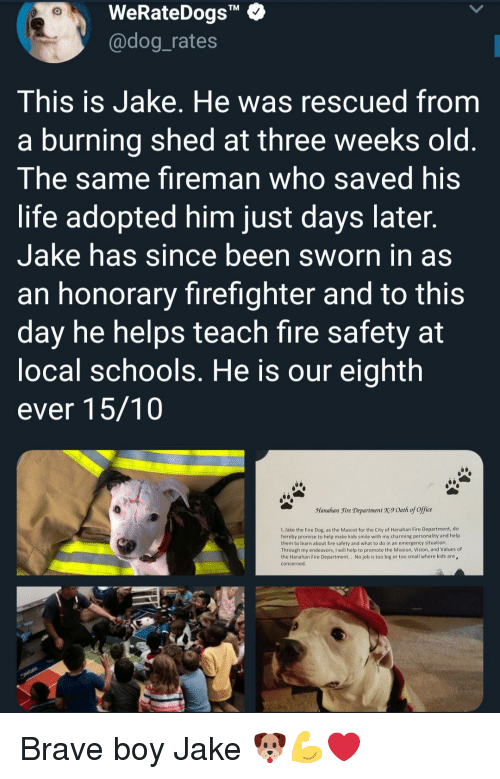 """Sworn: WeRateDogs""""  @dog_rates  TM  This is Jake. He was rescued from  a burning shed at three weeks old  The same fireman who saved his  life adopted him just days later  Jake has since been sworn in as  an honorary firefighter and to this  day he helps teach fire safety at  ocal schools. He is our eighth  ever 15/10  Manahan Fire Department X9 Oath of office  1, Jake the Fire Dog, as the Mascot for the City of Hanahan Fire Department, do  hereby promise to help make kids smile with my charming personality and help  them to learn about fire safety and what to do in an emergency situation  Through my endeavors, I will help to promote the Mission, Vision, and Values of  the Hanahan Fire Department.. No job is too big or too small where kids are  concerned Brave boy Jake 🐶💪❤"""