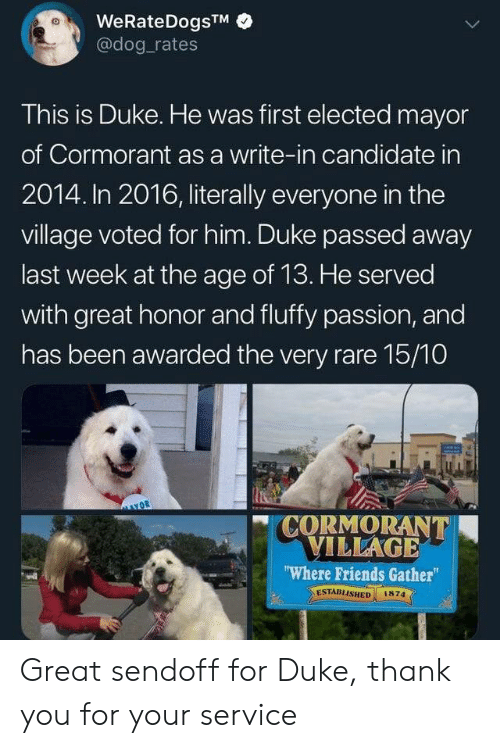 "In 2016: WeRateDogsTM  @dog rates  This is Duke. He was first elected mayor  of Cormorant as a write-in candidate in  2014. In 2016, literally everyone in the  village voted for him. Duke passed away  last week at the age of 13. He served  with great honor and fluffy passion, and  has been awarded the very rare 15/10  CORMORANT  VILLAGE  ""Where Friends Gather  ESTABLISHED  1874 Great sendoff for Duke, thank you for your service"