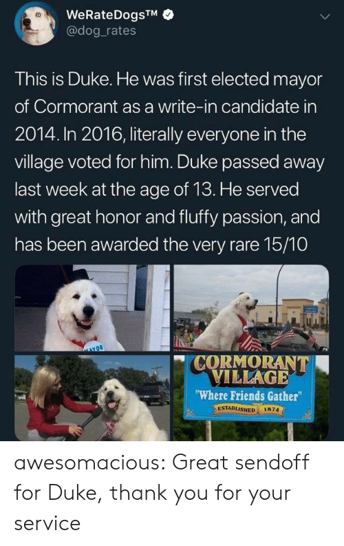 "In 2016: WeRateDogsTM  @dog rates  This is Duke. He was first elected mayor  of Cormorant as a write-in candidate in  2014. In 2016, literally everyone in the  village voted for him. Duke passed away  last week at the age of 13. He served  with great honor and fluffy passion, and  has been awarded the very rare 15/10  CORMORANT  VILLAGE  ""Where Friends Gather  ESTABLISHED  1874 awesomacious:  Great sendoff for Duke, thank you for your service"