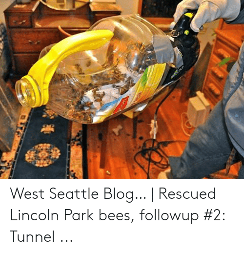 West Seattle Blog… | Rescued Lincoln Park Bees Followup #2