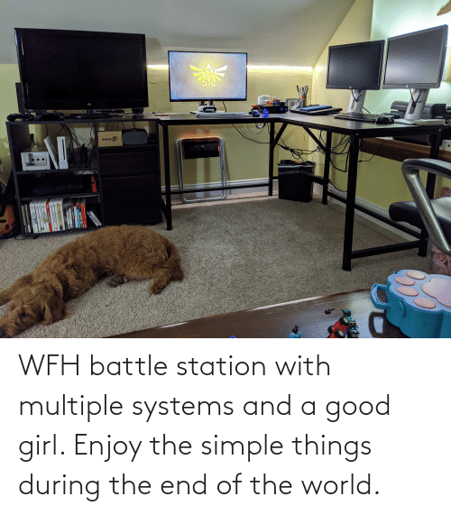 station: WFH battle station with multiple systems and a good girl. Enjoy the simple things during the end of the world.