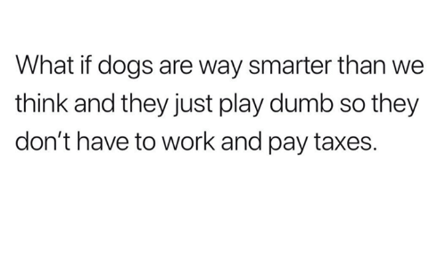 Dogs, Dumb, and Taxes: What if dogs are way smarter than we  think and they just play dumb so they  don't have to work and pay taxes.