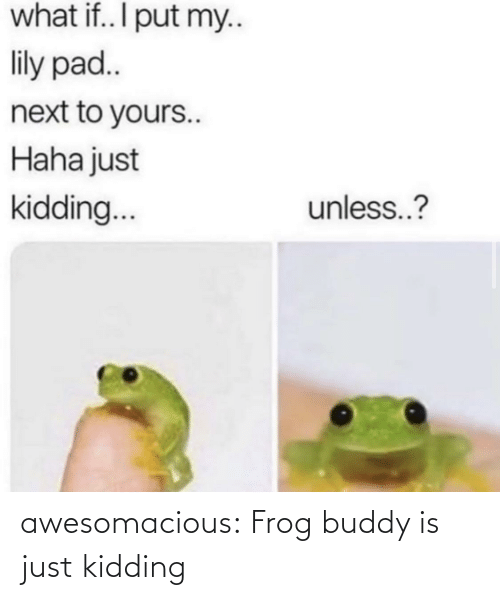 Tumblr, Blog, and Haha: what if.. I put my..  lily pad..  next to yours..  Haha just  unless..?  kidding.. awesomacious:  Frog buddy is just kidding